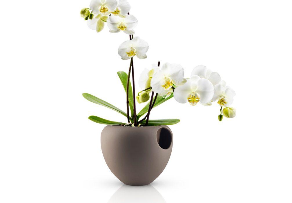 Un vaso moderno per arredare con le orchidee arredare for Vaso orchidea
