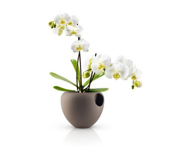 Vasi da interno arredare con stile for Vasi decorativi da interno